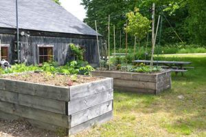 Raised beds in the Community Garden